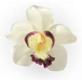 Collectif Orchid hair clip ivory